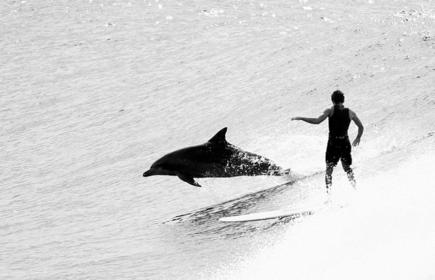 surfer-dolphin